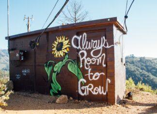 """Drewniana budka, a na niej namalowany słonecznik i napis """"Zawsze jest miejsce na rozwój"""""""